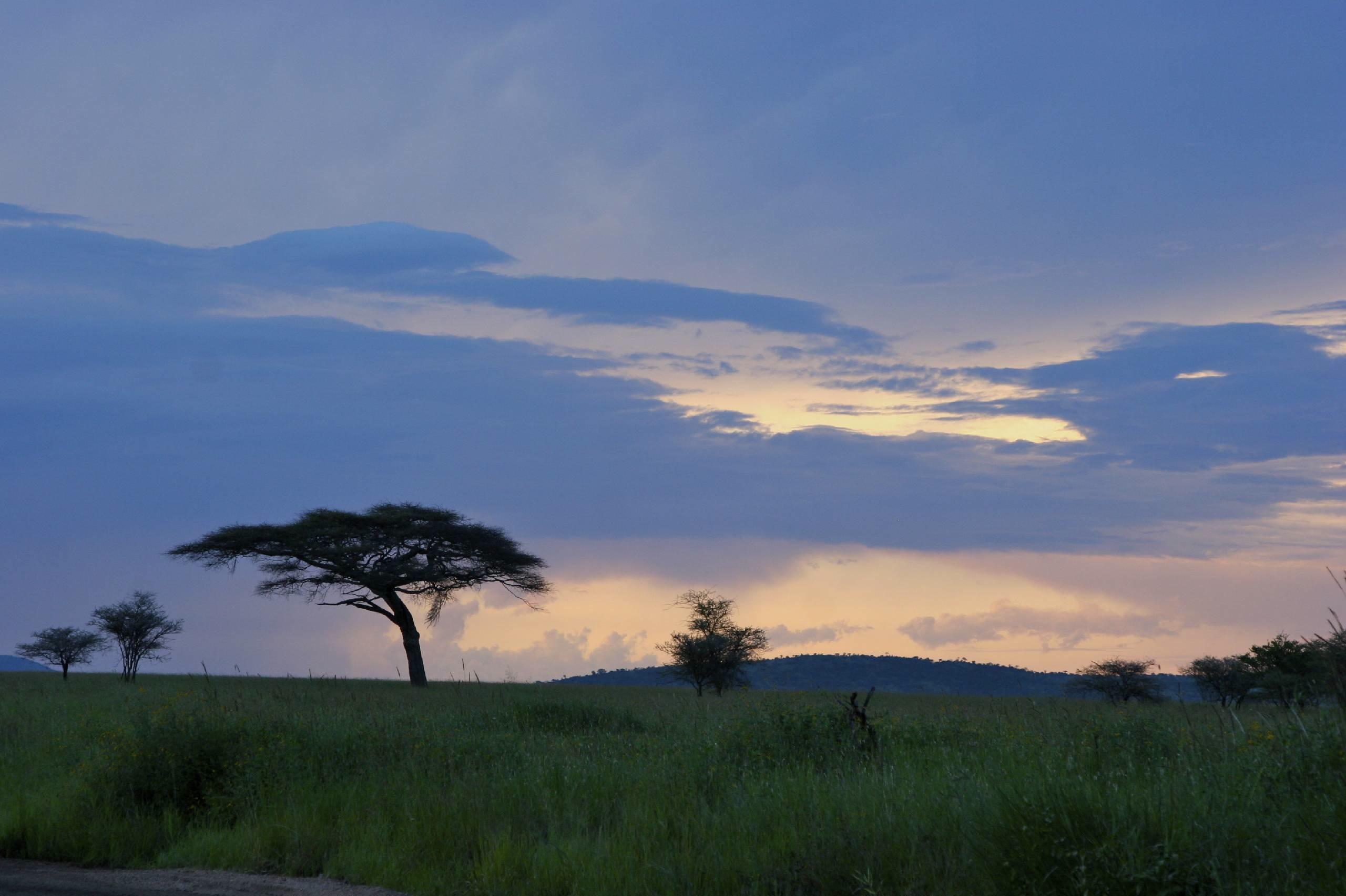 Le Safari en Tanzanie - 034.jpg