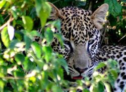 Safaris - photos en Afrique - 161.jpg