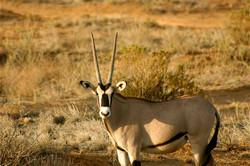 Couleurs australes en Namibie - 32.jpg