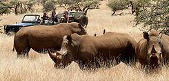 Rhinocéros, Kenya