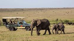 Kenya_MasaiMaraMaraNorth_ElewanaElephantPepperGameDrive-1