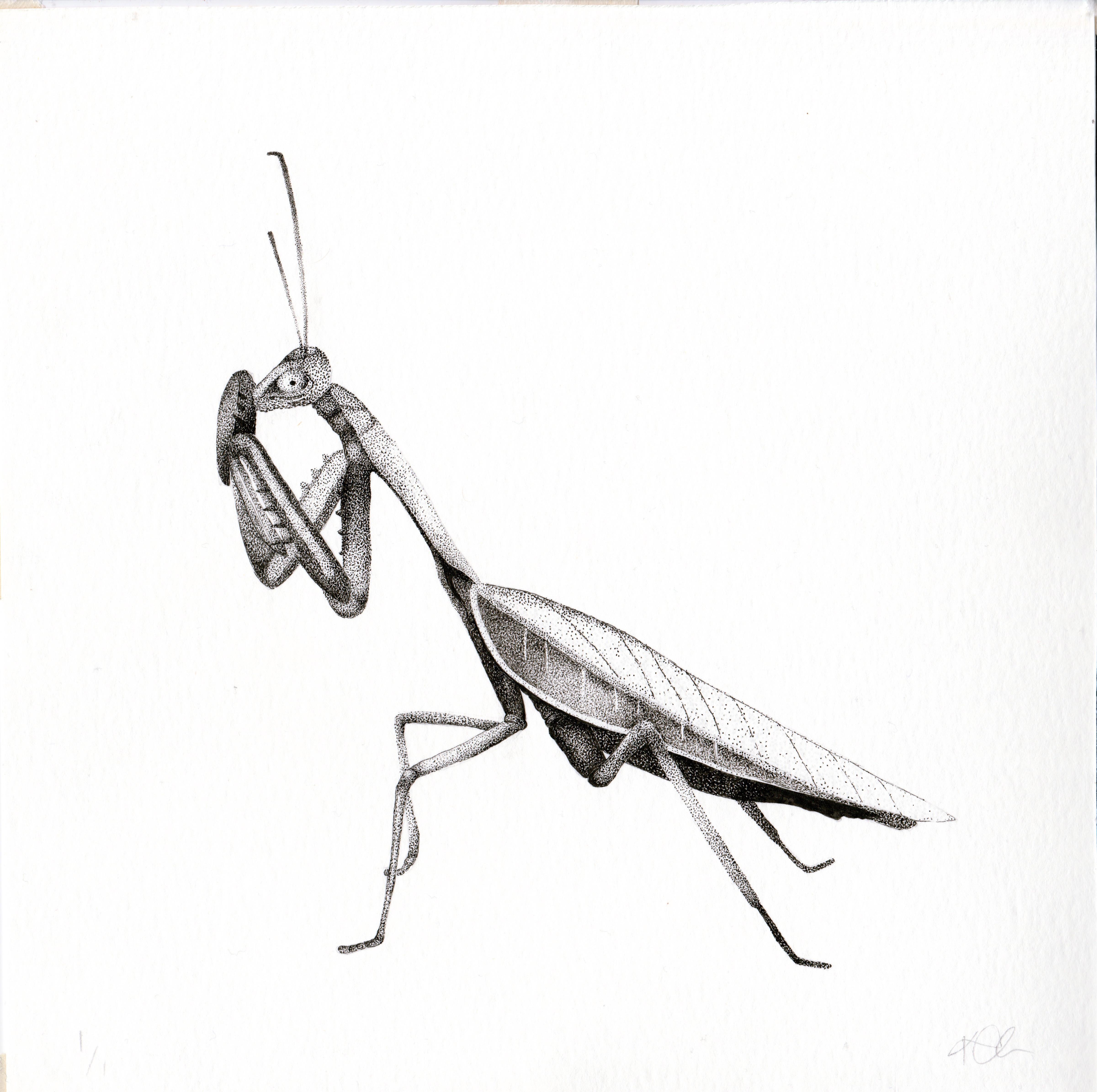 Mantis commission large