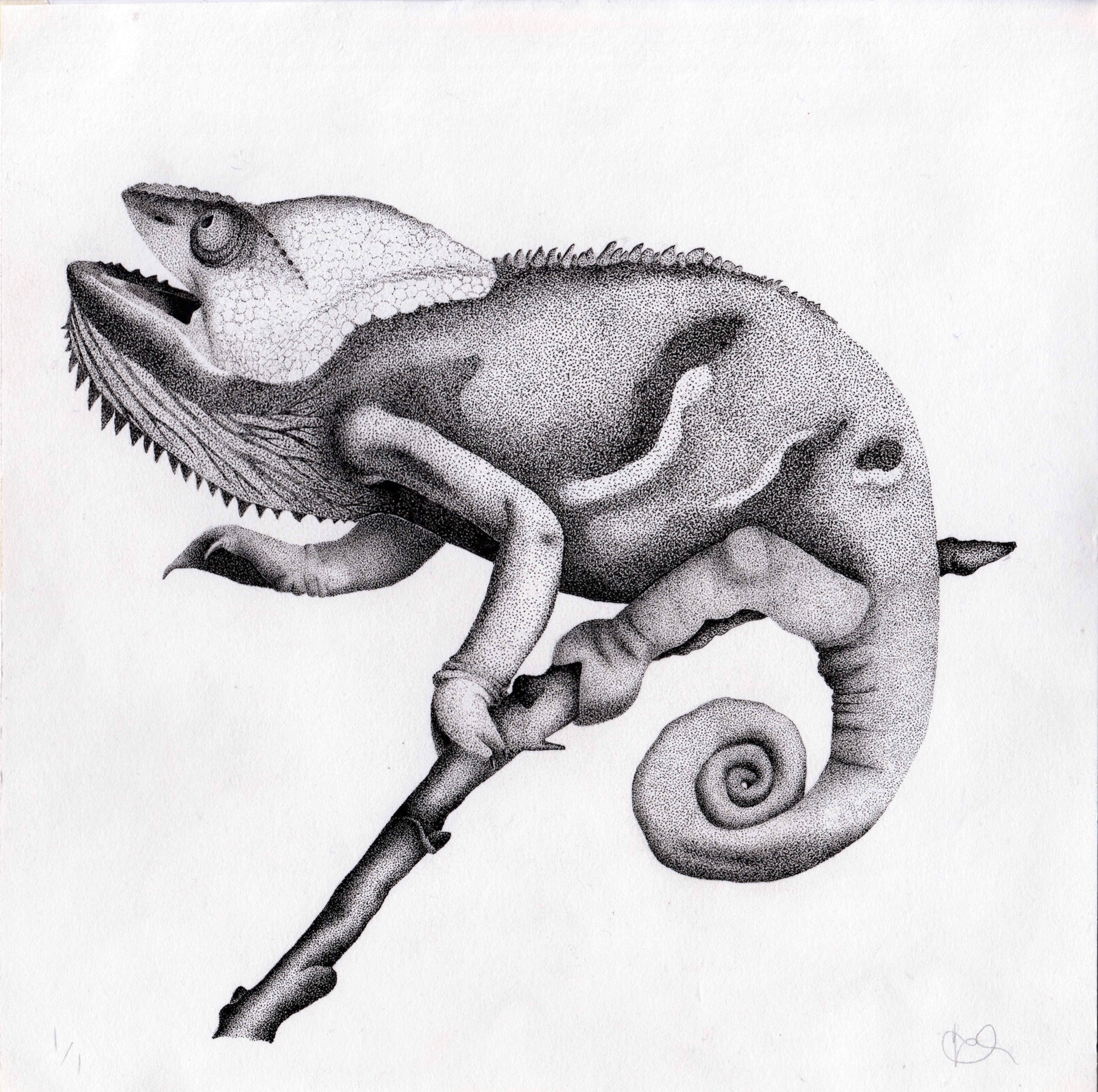chameleon commission large