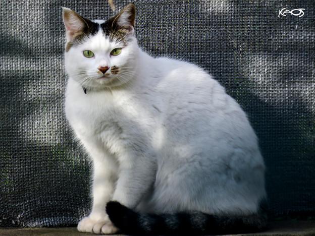 Gato Blanco.jpg