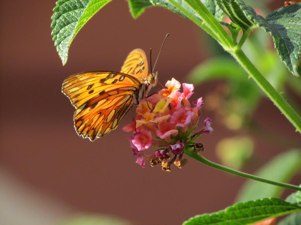 Mariposa Naranja (3072 x 2304).JPG