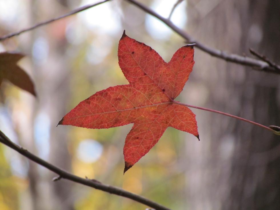 Hoja_de_otoño_(3072_x_2304).JPG