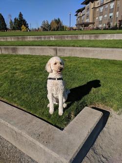 Taps Growler House Vancouver WA Dog Mascot