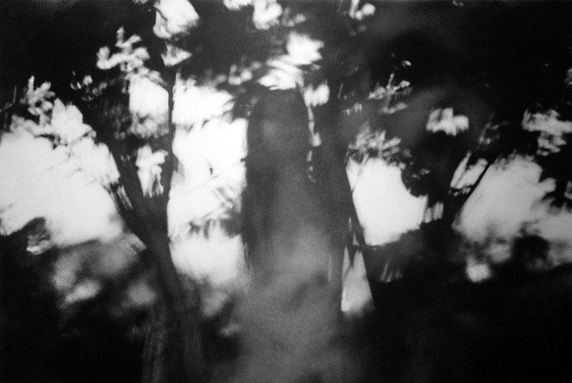 ForestShadows1111_edited.jpg