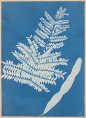 "Anna_Atkins,_""Honey_Locust_Leaf_and_Pod_(Gleditsia_triacanthos)""_(c._1854).jpg"