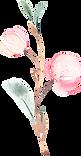 SakuraBlossoms_026.png