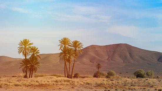 date palm.jpg
