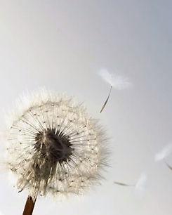 dust in the wind.jpg