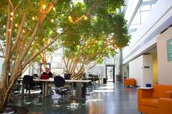 Markham BoT at IBM-innovation-space