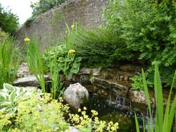 Pond & Iris
