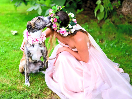 Fur Babies in Your Wedding