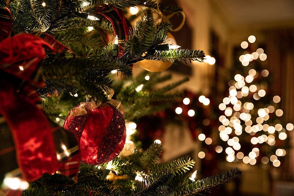 Christmas-trees-1188x792.jpg