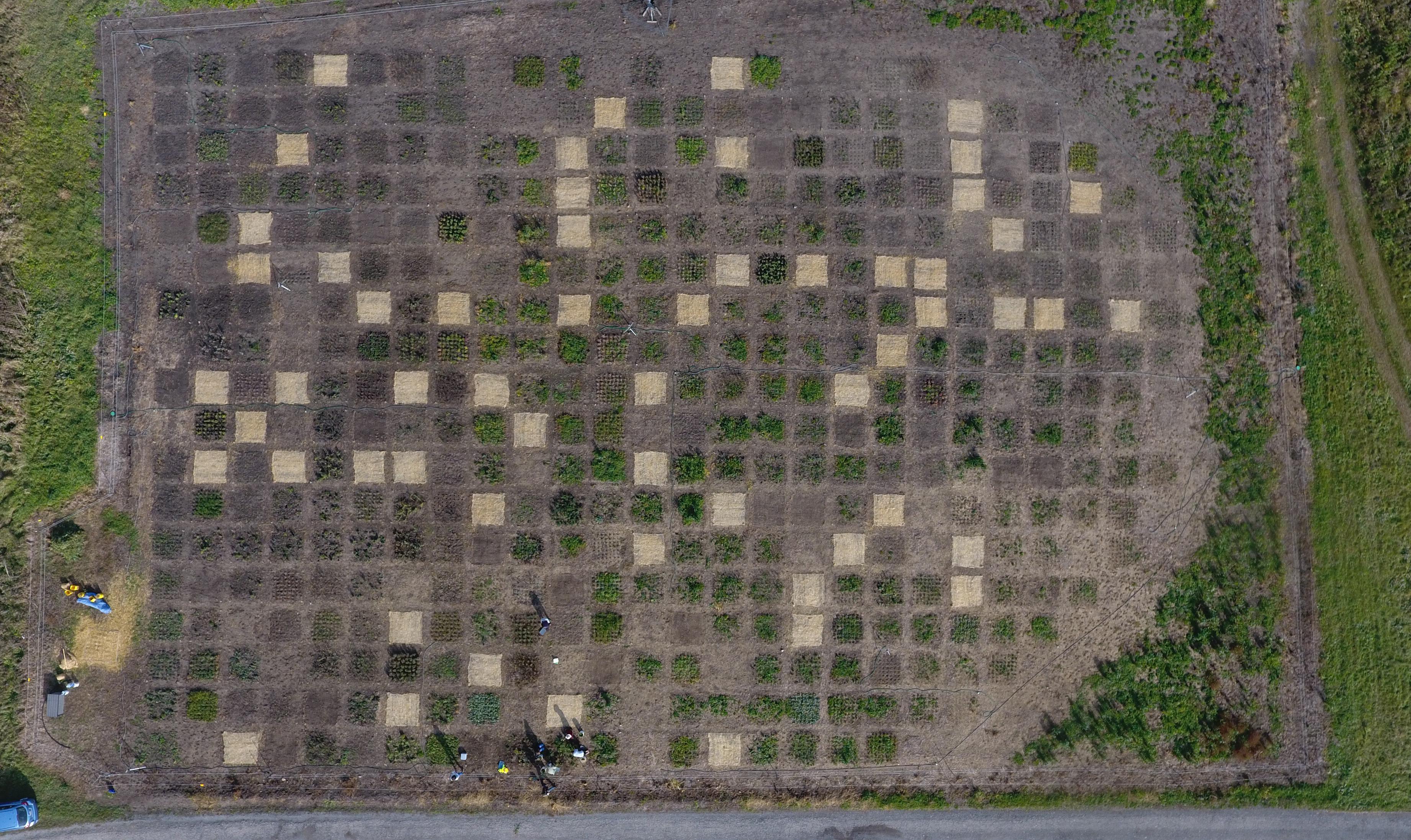 Morton Planting Experiment Fall 2016