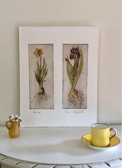 Narcissus and Iris