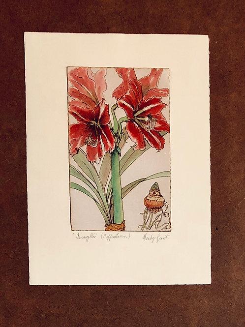 Amaryllis  print + free Flannel Flower card