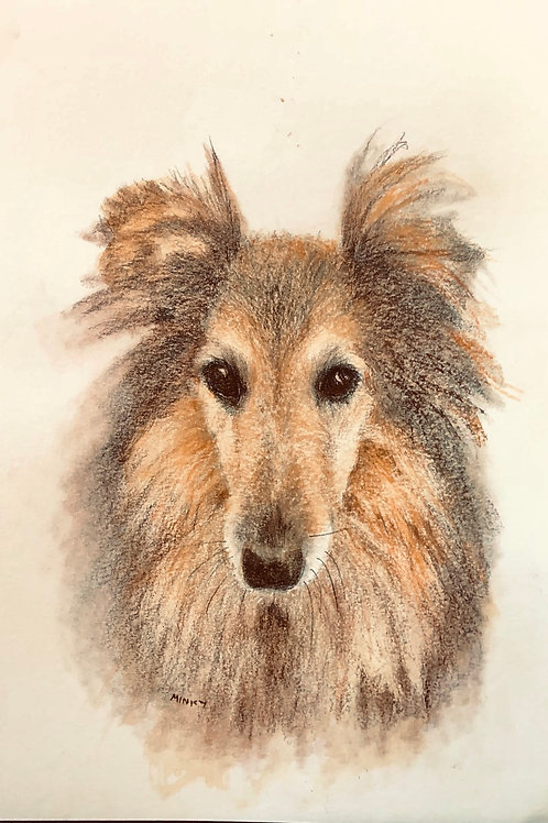 'KOHI'  Derwent soft drawing pencils on Arches 300gm paper
