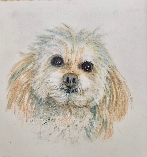 Pet portraits.  LILY