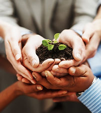 hands holdin a plant within soil