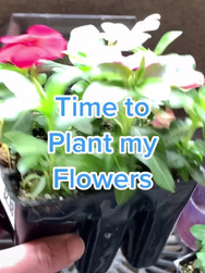 Mini Greenhouse Website