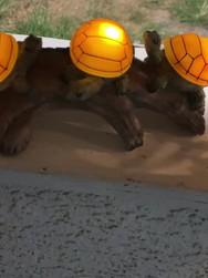 Turtles on a Log Solar Light