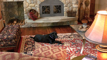 8 Reasons Wool rugs are right for you.