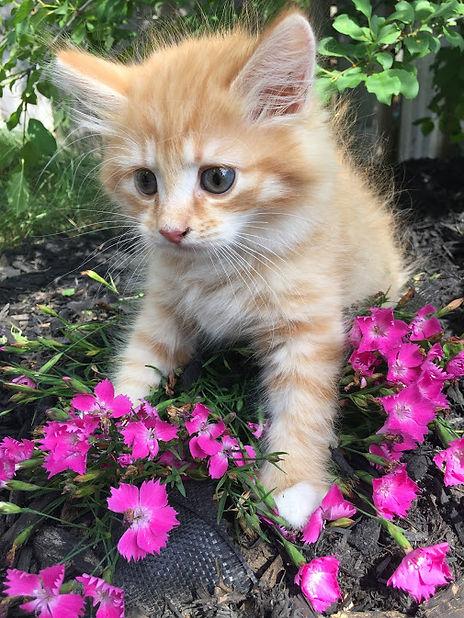 orange kitty 1.JPG