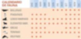 calendario de fauna en Peninsula Valdes
