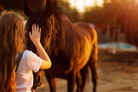 Das Pferd hat Rückenschmerzen