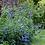 Thumbnail: Salvia Farinacea Blue Mealycup