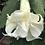 Thumbnail: White/Cream (N)