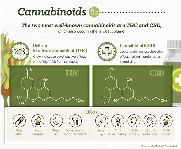 The Anatomy Of A Cannabis Plant And Its Lifecycle Las Vegas
