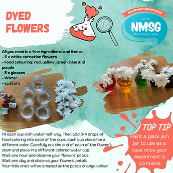 Dyed flowers - science.png