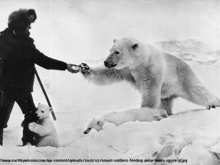 כוחו של צילום - החייל הסובייטי ודובי הקוטב