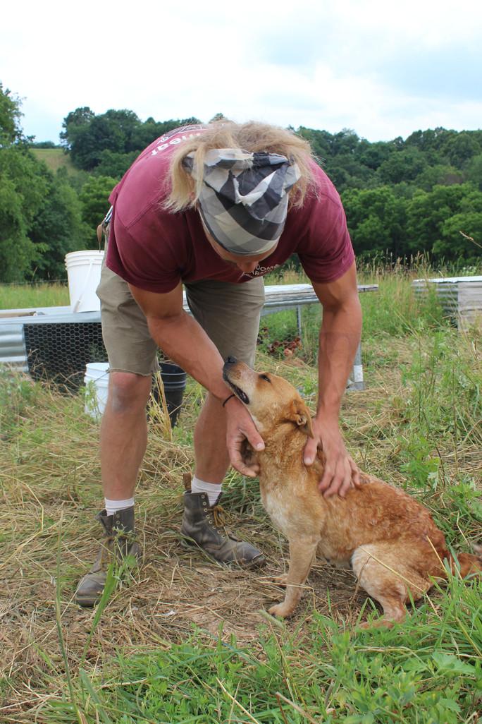 Ask Farmer Pete - Farm Dogs