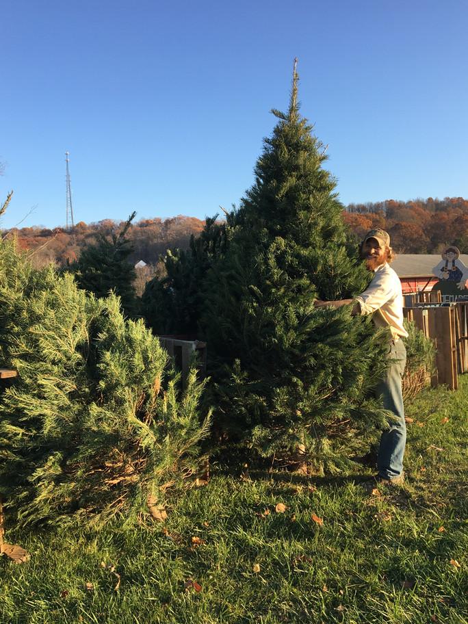 Farmer Tim's Christmas Tree Tips