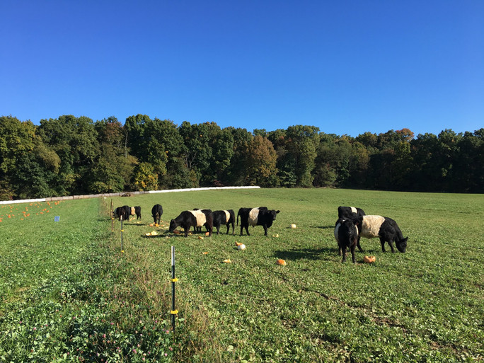 Ask Farmer Pete - Grass Fed vs. Pastured Beef