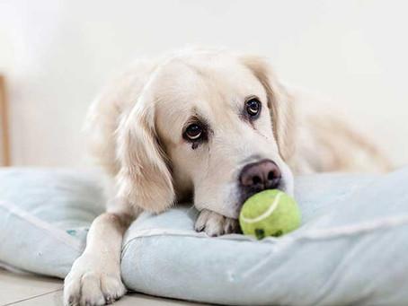 La artrosis en nuestras mascotas