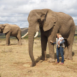 Addo Elephant Safaris