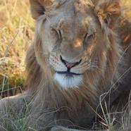 Pumba Private Game Reserve