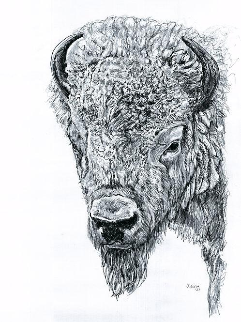 Custer Bull