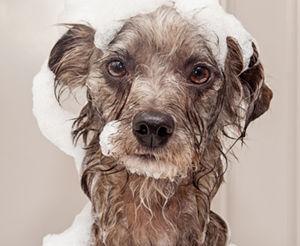 DOG WASH_v3.jpg