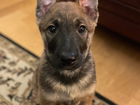 Let's talk about Puppies!