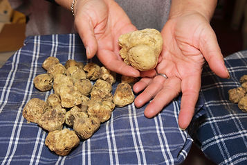 prized truffle of Tuscany valley d'Orcia