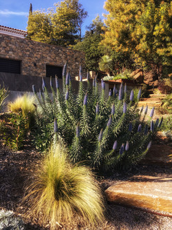 jardinier-ACIER-CORTEN-PAYSAGISTE-VAR-LAVANDOU-BORMES-TERRASSE-BOIS-FERRONNERIE-JARDIN-FLEURI