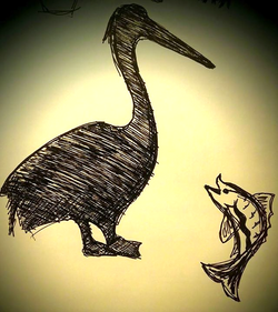 Sketching a conversation between the pelican and the fish