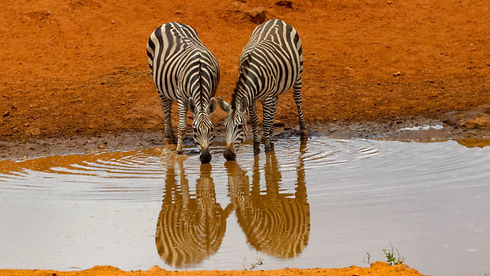 Zebra and water, operation